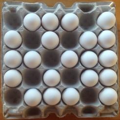 eggs.missing.2